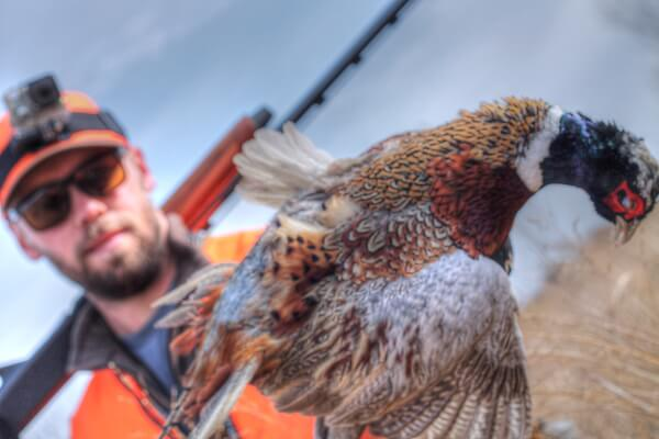 Kansas Pheasant Hunter