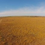 kansas pheasant hunting drone photo
