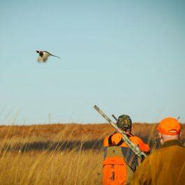 October Pheasant Hunting in Kansas