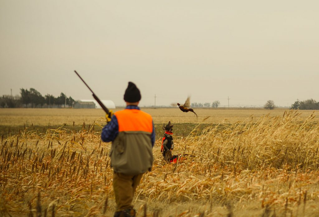 Pheasant Hunts in Kansas