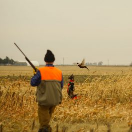 Pheasant Hunts in Kansas